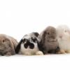 Saltando Decisión de Bunny aplaude la UE para la Prohibición de Pruebas con animales de los productos cosméticos