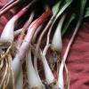 Rampas y espinaca Pesto Receta