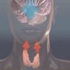 Vídeo: La conexión de la tiroides-Brain